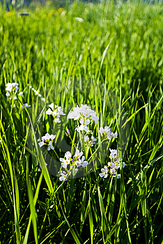 Grass And Flowers Royalty Free Stock Images - Image: 15064819