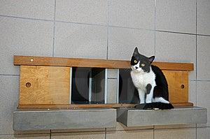 Cat On Shelf Royalty Free Stock Photography - Image: 15068177
