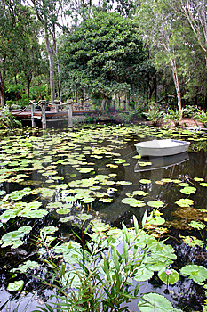 Lily Pond Stock Photos - Image: 15069513