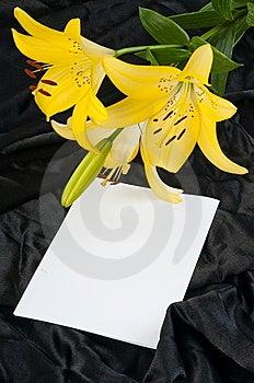 Lis Et Draperie. Photos libres de droits - Image: 15072768