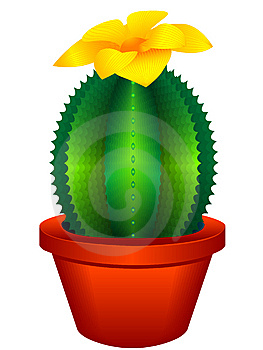 Indoor Plant A Cactus Royalty Free Stock Images - Image: 15074459