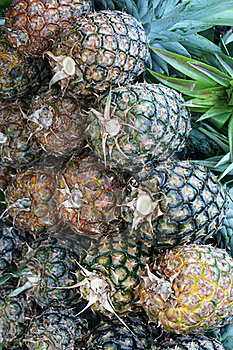 Pineapples Royalty Free Stock Photo - Image: 15079365