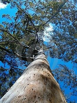 Tall Tree Stock Photo - Image: 15087890