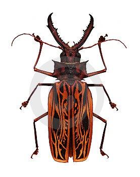 Big Orange And Black Horned Beetle Stock Photography - Image: 15091762