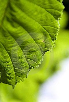 Leaf Fragment Royalty Free Stock Image - Image: 15094606