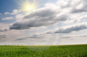 Green Wheat And Beautiful Blue Sky. Royalty Free Stock Photos - Image: 15097518