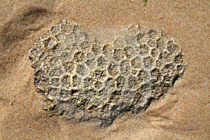 Coral On The Beach Stock Images - Image: 15098114