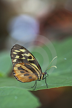 Exotic Butterfly On Leaf Stock Image - Image: 15098751