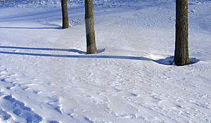 Winter Trees And Shadows Stock Images - Image: 1512964