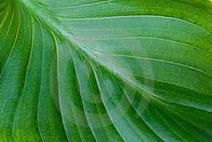 Zielony Tło Liść Zdjęcie Royalty Free - Obraz: 15101765
