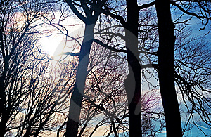 Silhouetted Trees In Sunlight Stock Image - Image: 15102231