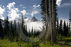 Mount Rainier Stock Image - Image: 15102321