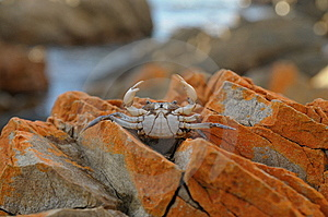 Crab Stock Photos - Image: 15103993