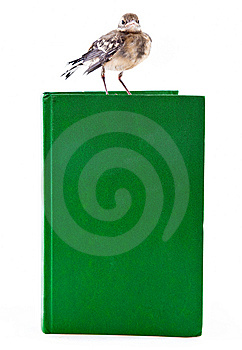 Nestling Of Bird (wagtail) On Book Stock Photo - Image: 15106340