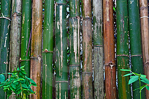 Bamboo Fence Royalty Free Stock Images - Image: 15107089