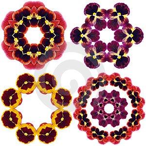 Pansy Flower Mandalas Stock Photography - Image: 15108052