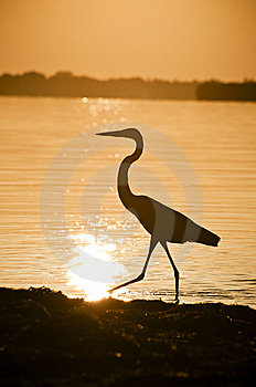 Great Blue Heron Surnise Silhouette Stock Photography - Image: 15110802