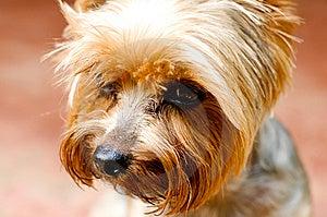 Dog Royalty Free Stock Photo - Image: 15112895