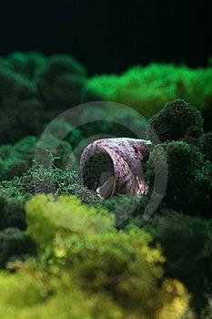 Sea Shell Stock Photos - Image: 15115863