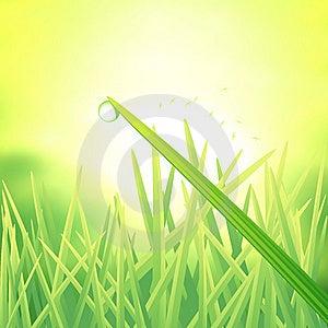Morning Dew Drop Stock Image - Image: 15117491
