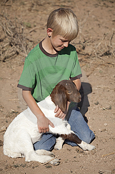 Boy Green Shirt With Baby Goat Stock Images - Image: 15117734