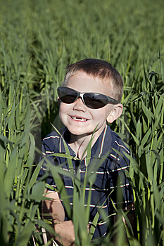 Boy With Sunglasses In Tall Oat Field Stock Image - Image: 15117791
