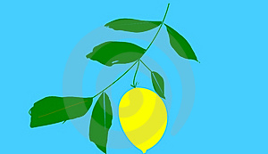 The Citron Stock Photos - Image: 15118643