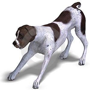 German Short Hair Dog Stock Photo - Image: 15119090