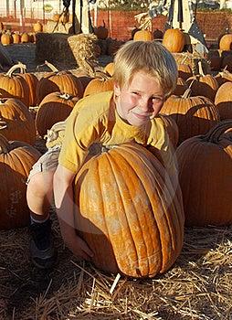 Boy Pumpkin Stock Photography - Image: 15122072