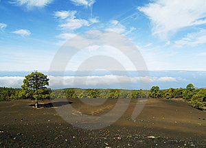 Green Tree Standing On The Earth With Clouds. Stock Images - Image: 15122234