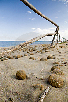 Dried Sea-weed At The Natural Reserve Beach Royalty Free Stock Photography - Image: 15128597