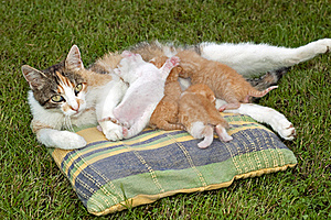 Cute Cats Royalty Free Stock Images - Image: 15131059