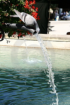 Pigeon Drinking Water Stock Photography - Image: 15135142
