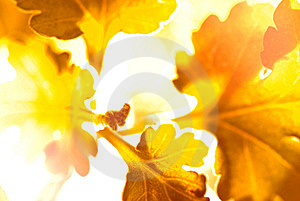 Similar Leaf In Fantasy Royalty Free Stock Images - Image: 15143289