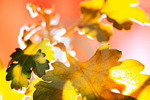 Similar Leaf In Fantasy Stock Photography - Image: 15143292