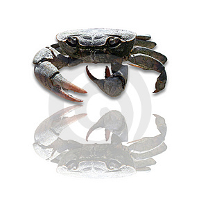 Crab Free Stock Photography