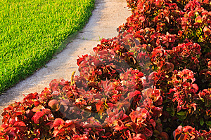 Contrast Plants Stock Photography - Image: 15147352