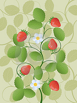 Strawberry Stock Photo - Image: 15147790