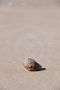 Shell In The Sand Of The Beach Stock Photos - Image: 15149843