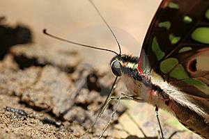 Butterfly Stock Image - Image: 15157921