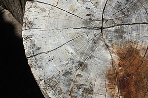 Texture Of Wood Stock Images - Image: 15164394
