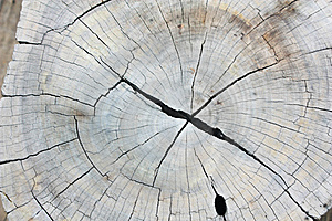 Texture Of Wood Royalty Free Stock Image - Image: 15164406