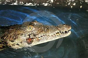 Crocodile Stock Photography - Image: 15165822
