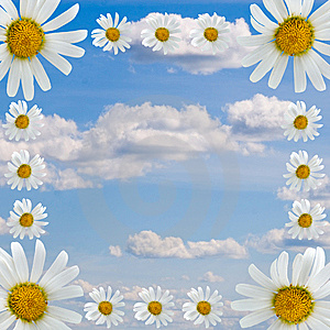 Frame Of Daisies Stock Images - Image: 15166514