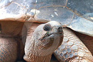 Tortoise Royalty Free Stock Photo - Image: 15171055