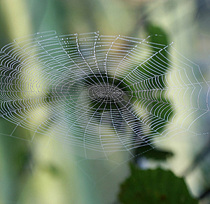 Spiderweb Stock Photography - Image: 15171722
