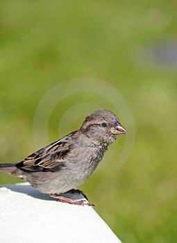 Bird Stock Photos - Image: 15174803