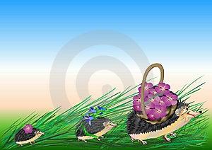Congratulation - A Sample Royalty Free Stock Image - Image: 15174856