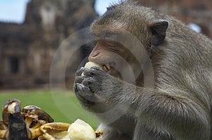 Monkey-28 Royalty Free Stock Photography - Image: 1525587
