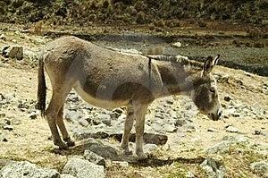 Donkey Stock Photo - Image: 1529250